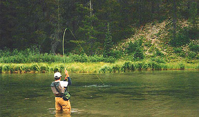 Snowy Springs fly fishing