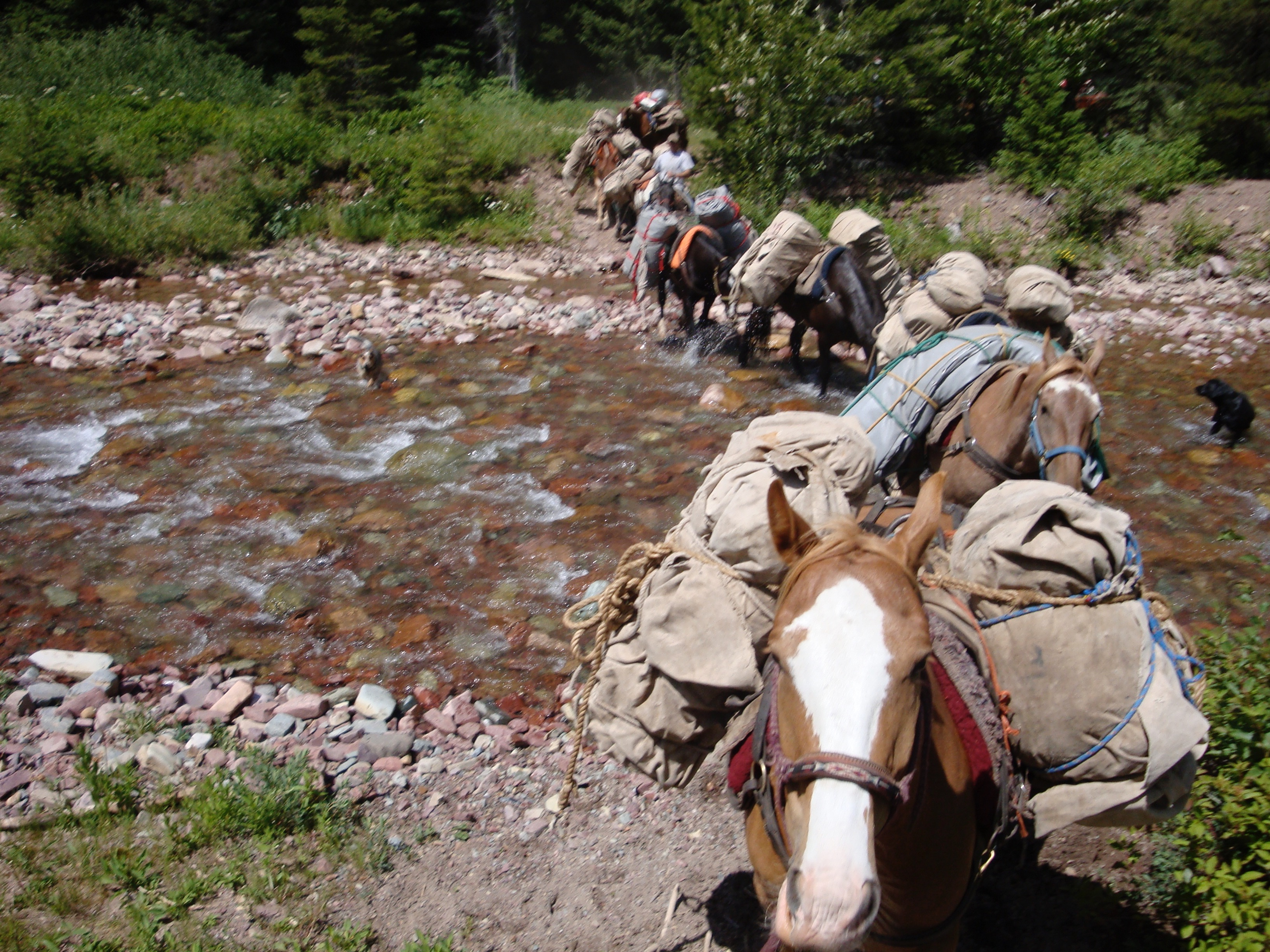 Snowy Springs pack string crossing river
